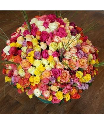 401 trandafiri colorati in cos