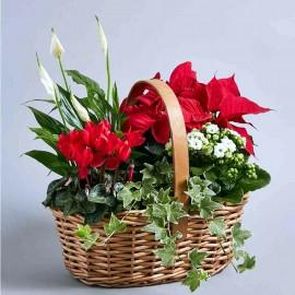 Aranjament de iarna din plante cu floare in cos