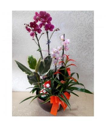 Aranjament din plante cu Orhidee si plante verzi