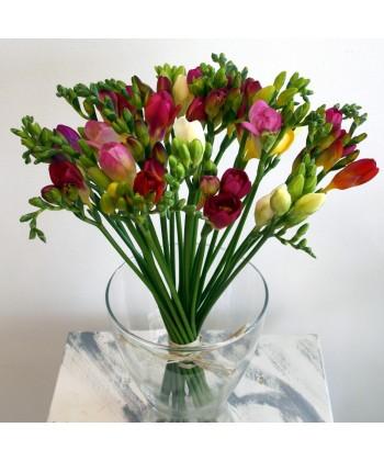 25 frezii colorate + vaza cadou