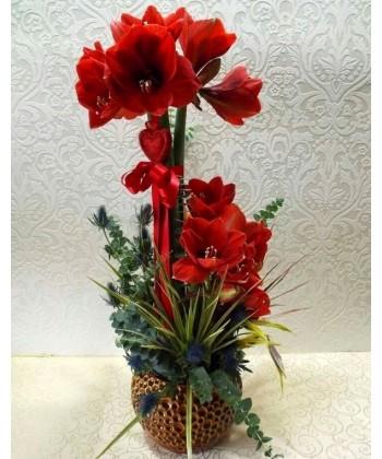 Aranjament amaryllis, eryngium si eucalipt
