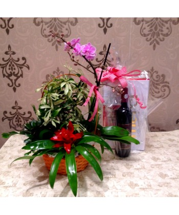 Aranjament floral pentru zi de nastere cu plante de interior