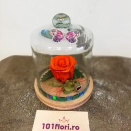 Trandafir portocaliu criogenat in cupola cu fluturas