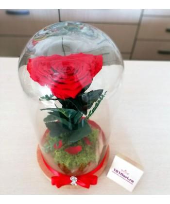 Trandafir criogent rosu inima in cupola mare