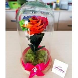 Trandafir criogenat rainbow in cupola cadou superb