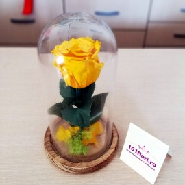 Cupola trandafir criogenat galben cadou aniversar