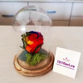 Trandafir criogenat curcubeu in cupola