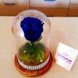 Cupola trandafir criogenat albastru cadou