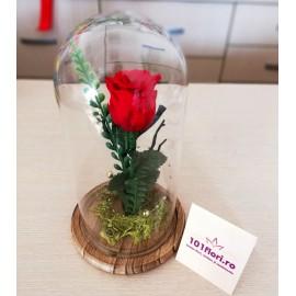 Cupola trandafir rosu criogenat cadoul celor indragostiti