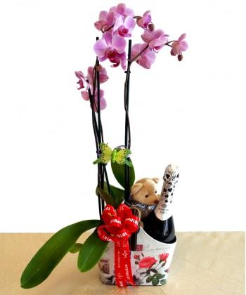Aranjament cadou pentru ea dar si pentru el cu orhidee, sampanie si ursulet