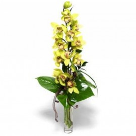 Buchet cu orhidee cymbidium, verdeata si vaza