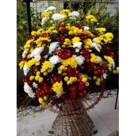 Cos 101 crizanteme viu colorate