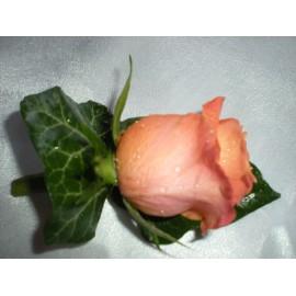 Cocada din trandafir orange